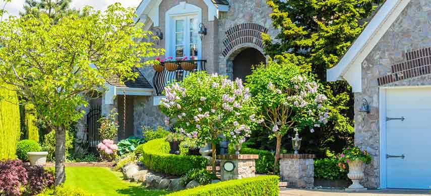 Какие деревья рекомендуется сажать рядом с вишней, а каких соседей надо исключить