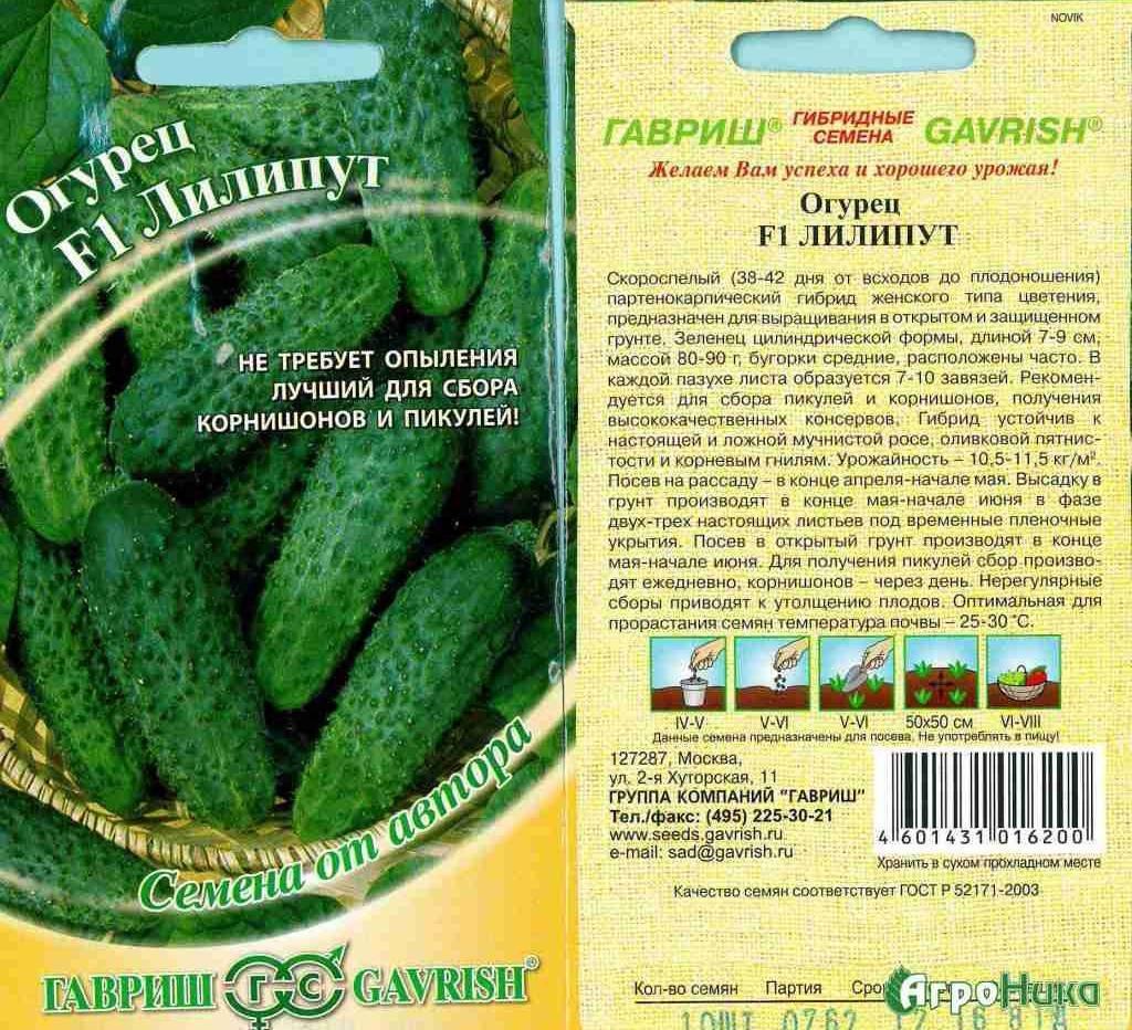 Сорт огурцов лилипут: описание, характеристика, выращивание и уход