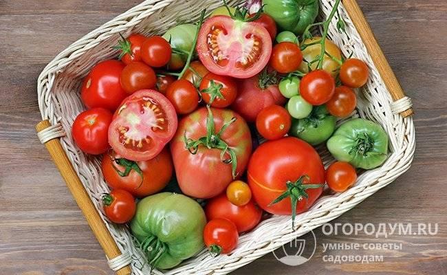Как хранить зелёные помидоры, чтобы они покраснели?