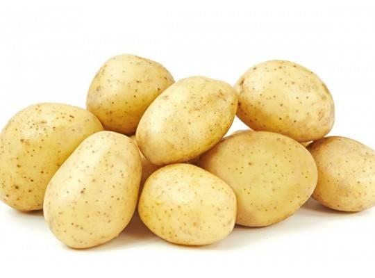 Щедрый на урожаи и неприхотливый в уходе картофель — леди клер: описание сорта и характеристика