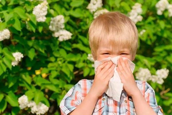 Аллергия на тыкву