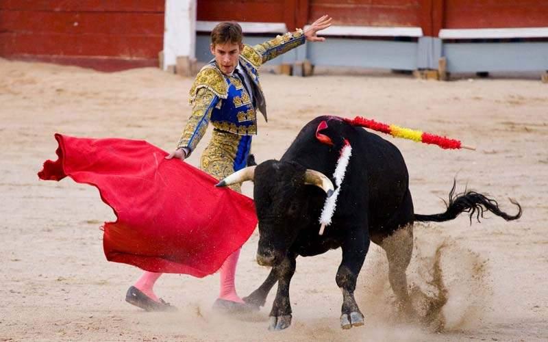 Быки не различают цвета. действительно ли быки ненавидят красный цвет? почему быки реагируют на красный цвет