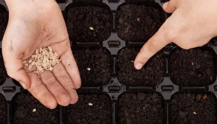 Все этапы подготовки семян к посеву: перца, томатов, обязательна ли выбраковка и барботирование, как правильно их проводить
