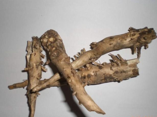 Применение корня подсолнуха в медицине