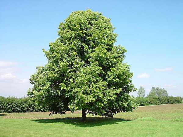 Листопадные растения,  деревья и кустарники