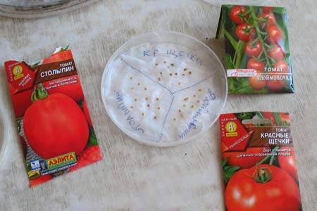 Рассада помидор в домашних условиях | топ огород