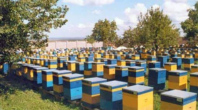 Бизнес-план пчеловодства: как начать заниматься разведением пчёл и выгодно ли это?