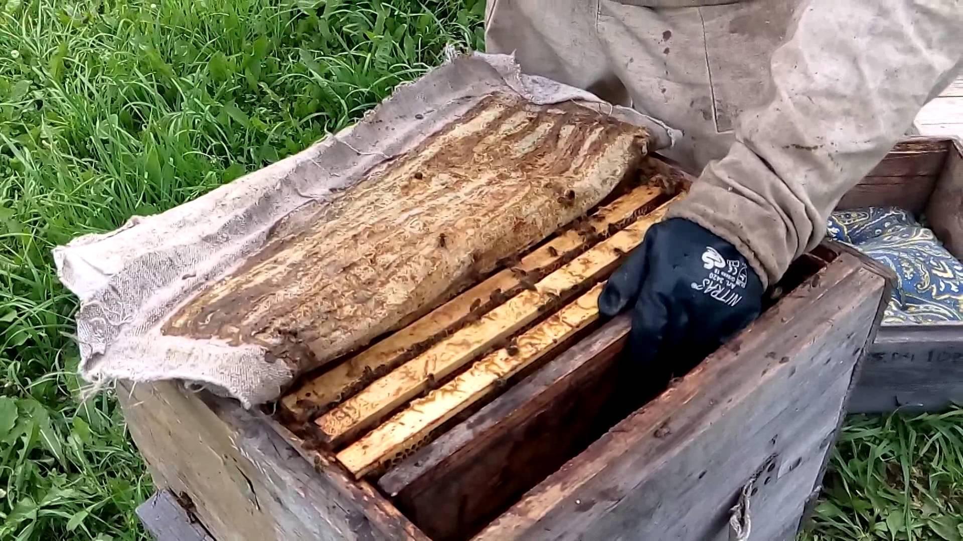 Как объединить пчелиные семьи | практическое пчеловодство