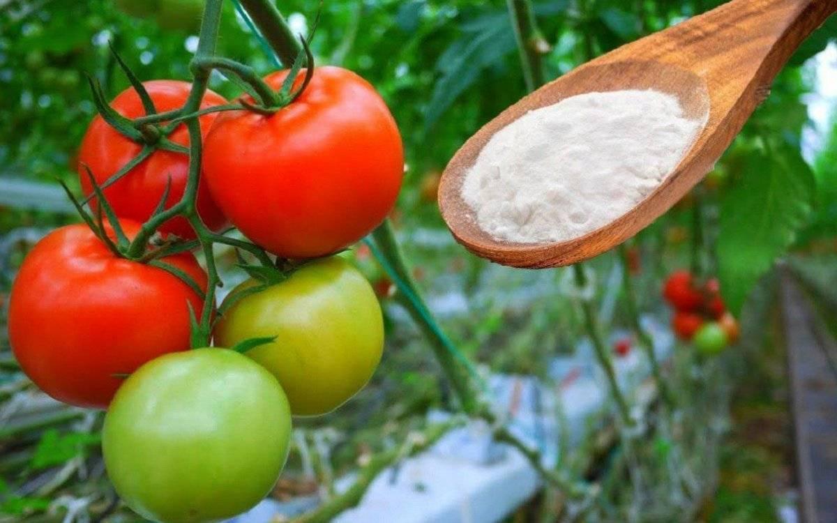 Пищевая сода от тли: рецепты, применение