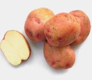 Описание сорта картофеля ермак