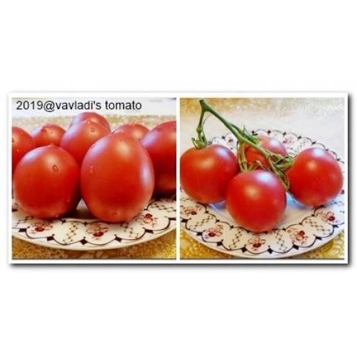 Описание сорта томата сызранская пипочка, выращивание и уход
