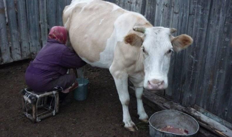 Телязиоз крупного рогатого скота (крс): симптомы, диагностика, лечение и профилактика