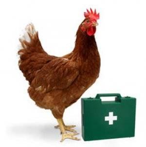 Колибактериоз у домашней птицы
