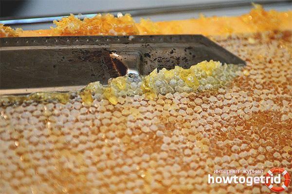 Пчелиный забрус: польза и применение