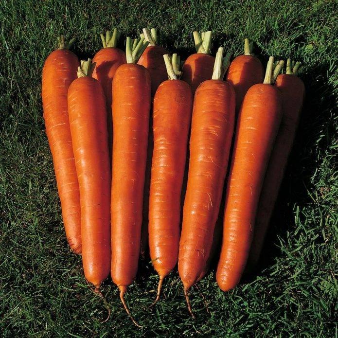Морковь ярославна когда сажать
