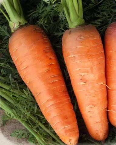 Черная морковь: что это такое, где растет и как выглядит на фото, а также состав мякоти и сока, сорта и агротехника выращивания