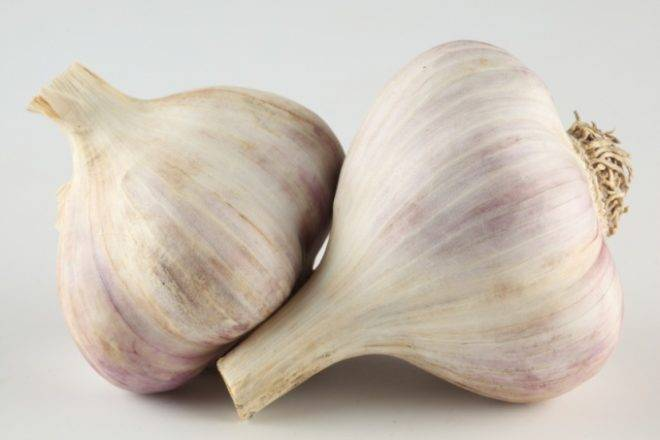 Овощ чеснок: посадка и уход в открытом грунте, фото, выращивание из семян, уборка, хранение