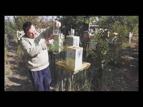 Поилка для пчел: зачем нужны, виды, как сделать своими руками