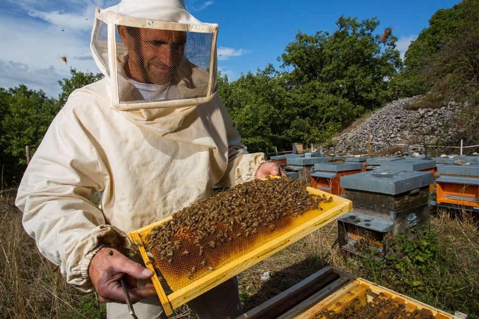 Нозематоз пчел — профилактика и лечение