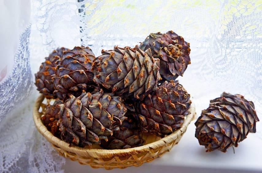 Кедровые орехи — польза и вред