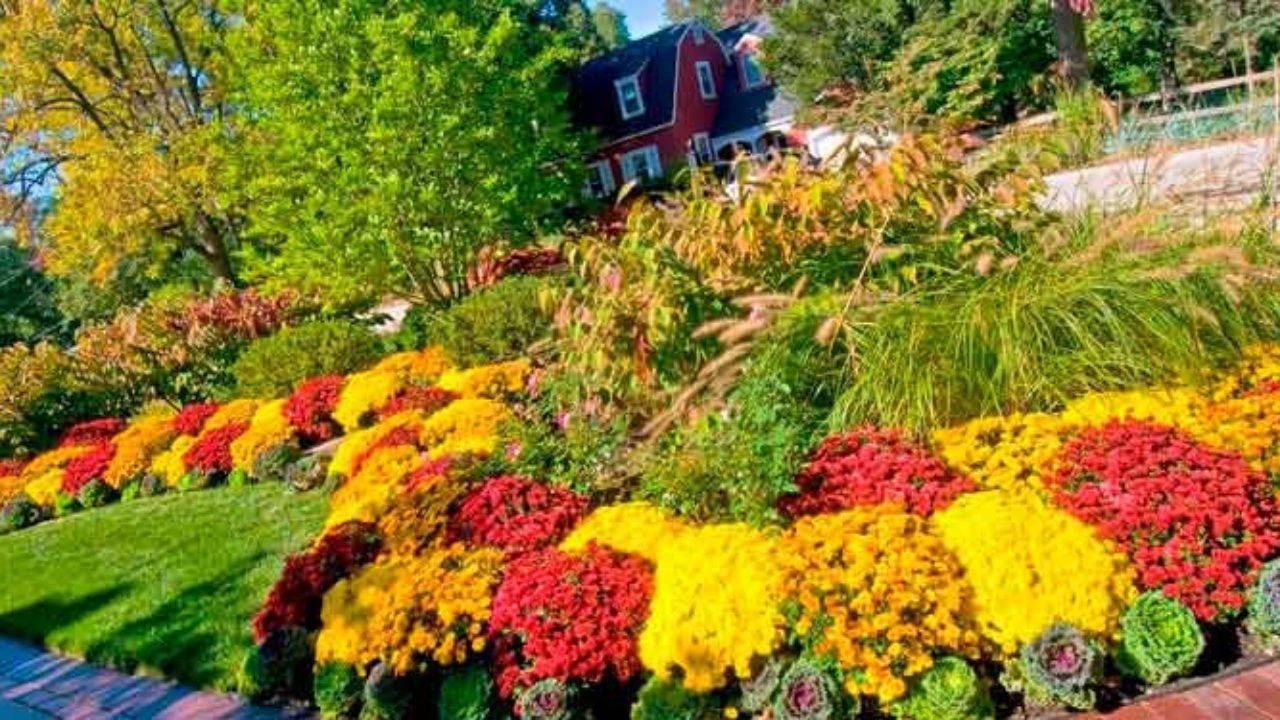 Миксбордер своими руками: подбор растений, схема и фото
