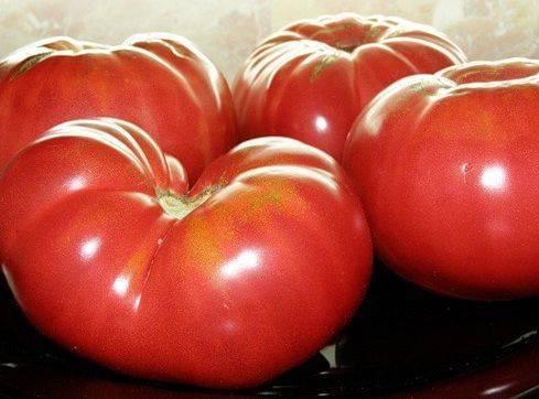 Яркий томат в вашей теплице: подробное описание сорта хохлома, правила ухода, отзывы
