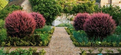 Барбарис в саду: какой сорт выбрать и как правильно посадить