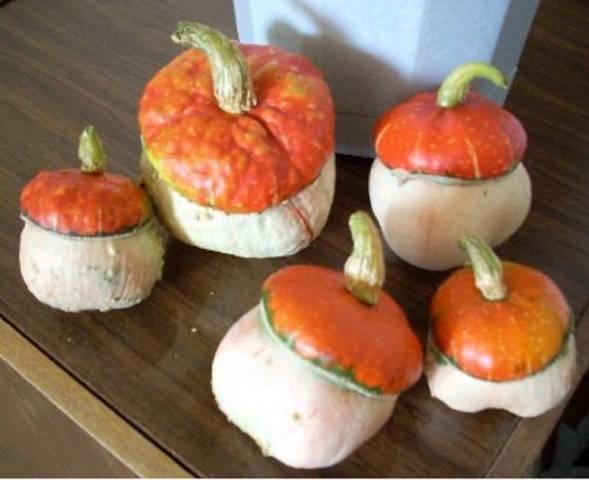 Кабачок грибовский: описание сорта, фото, посадка, уход, отзывы