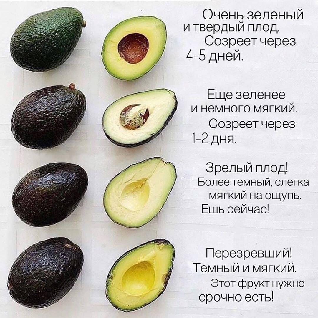 Авокадо Хаас: чем отличается от обычного, польза, как едят