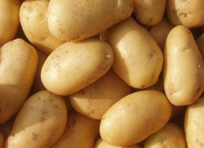 Картофель невский: сортовая характеристика, особенности выращивания