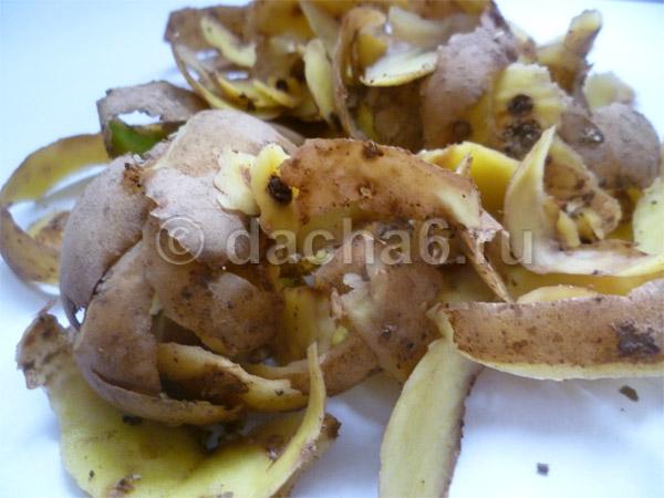 Подкармливаем смородину отходами картофеля