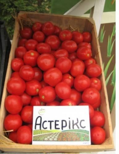 Астерикс f1 — универсальный, вкусный, хрустящий огурчик