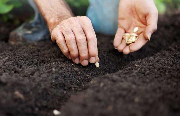 Выращивание овощей: секреты выращивания тыквы из семян