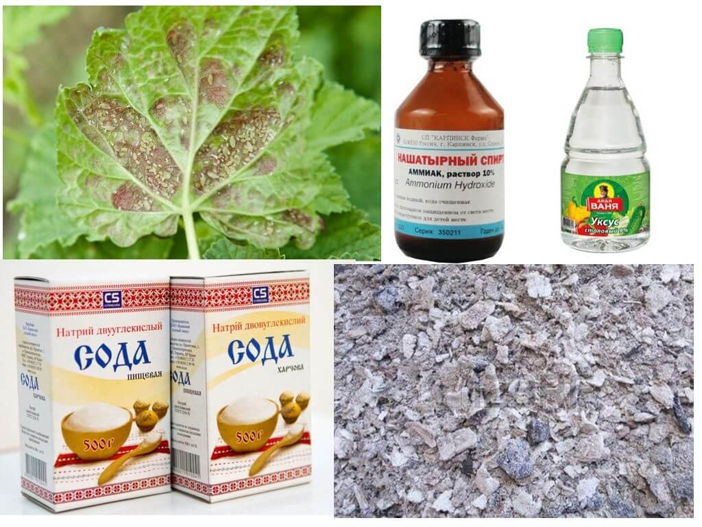 Методы борьбы и профилактики смородины от тли и муравьев