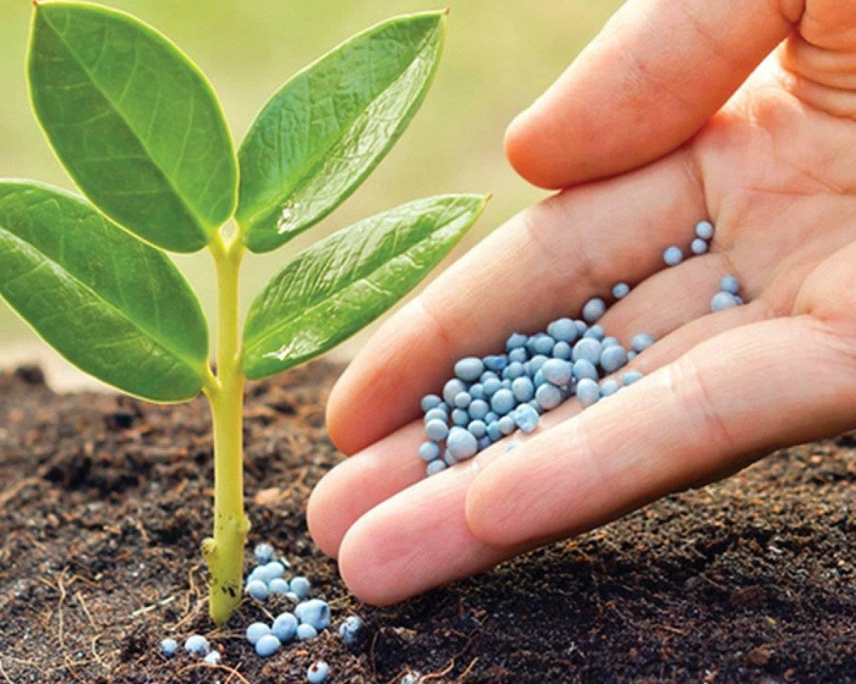 Азофоска для помидор: применение удобрения, хранение, преимущества, сроки внесения