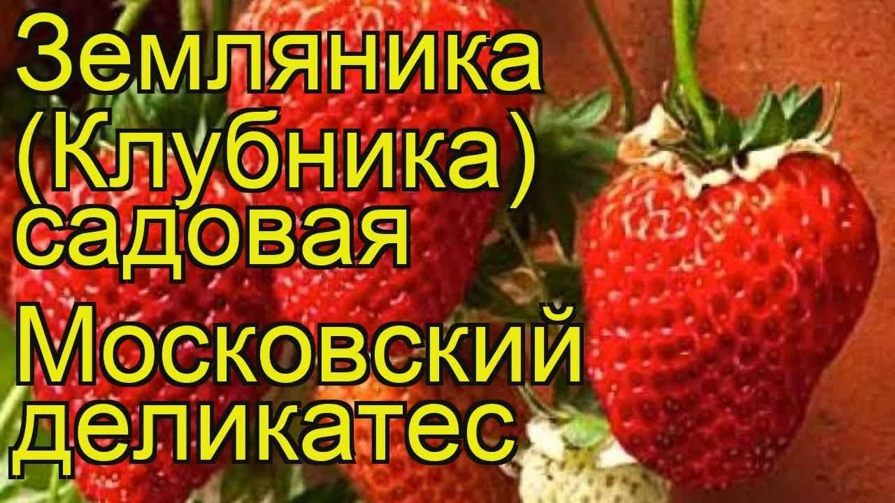 Клубника москвичка описание сорта