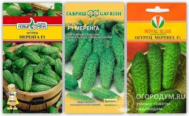 Гибрид огурцов «пасалимо f1» для всей территории страны: фото, видео, описание, посадка, характеристика, урожайность, отзывы