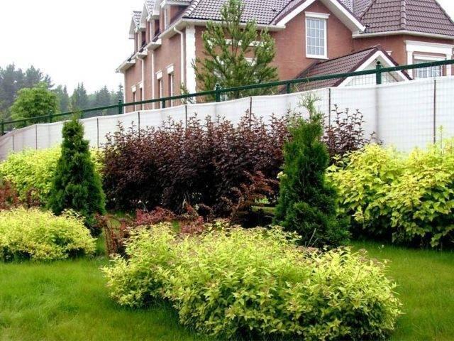 75 идей растений для ландшафтного дизайна с фото