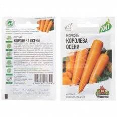 Характеристика сорта моркови королева осени