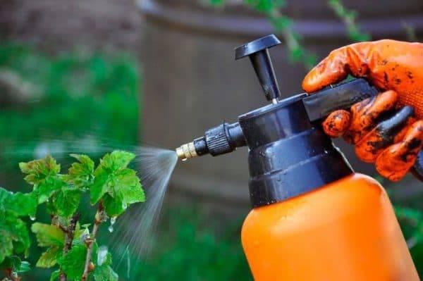 Обработка деревьев мочевиной и медным купоросом от вредителей и болезней
