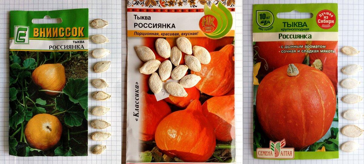 Лучшие сорта тыквы кустовой для открытого грунта: описание, фото