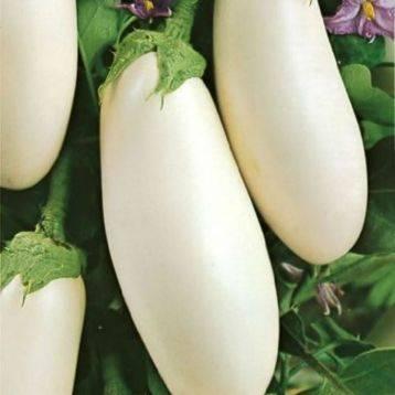Баклажан вкус грибов: характеристика, выращивание сорта, фото