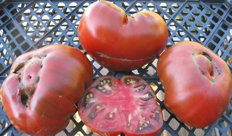 Описание сорта томата арбузный — правила выращивания