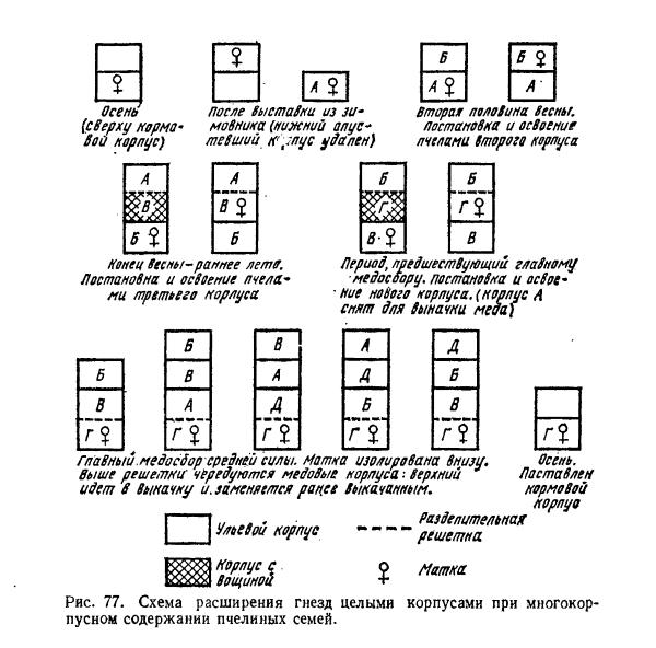 Особенности конструкции двухкорпусного улья