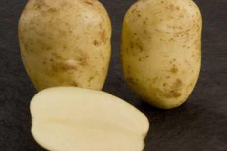 Картофель рагнеда: характеристика и описание