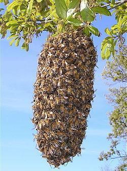 Интересные факты о пчелах
