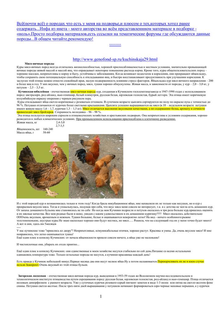 Как выращивать загорских лососевых кур в частном подворье?