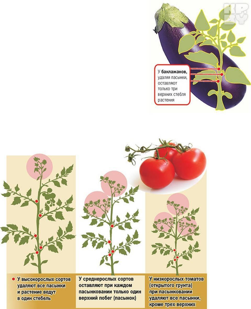 Формирование низкорослых томатов