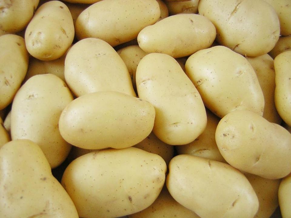 Картофель гранада характеристика сорта