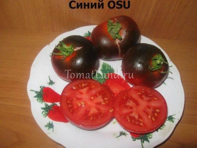 Помидоры сорта груша для салатов и засолки
